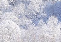 雪害・凍害画像1